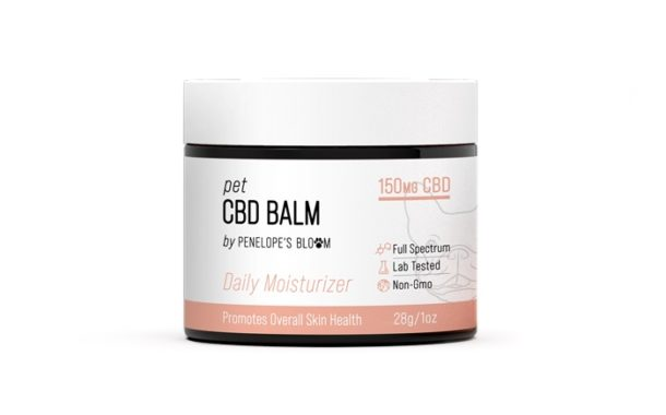 CBD Balm For Dogs - What You Need To Know