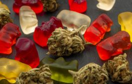 CBDFX CBD Gummy Bears 1500mg Review: Can It Help with Cancer?